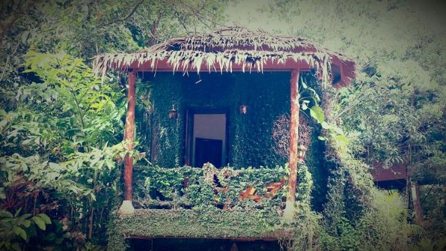tree-hut1