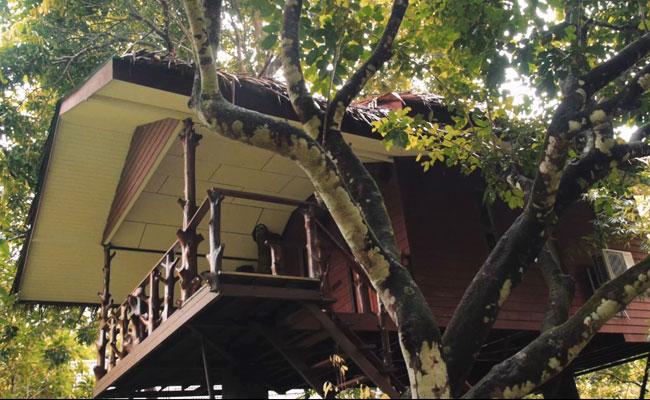 deluxe-tree-house-exterior