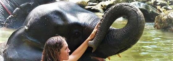 Elephant Jungle Treks
